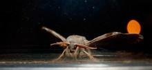 Moth By Night On Window In Mou...