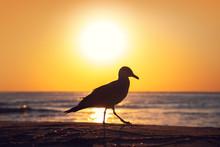 Seagull On The Beach Sand Against The Sea