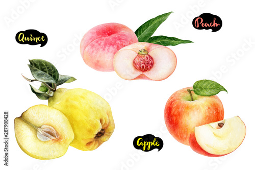 Photographie Apple peach quince set fruit watercolor isolated on white background