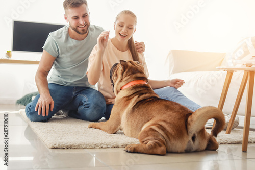 Obraz Happy couple training cute dog at home - fototapety do salonu