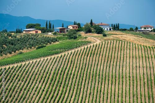 Canvastavla  Landscape in Chianti near Fucecchio at summer