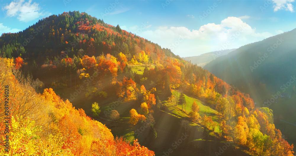 Fototapeta Schwarzwald im Herbst