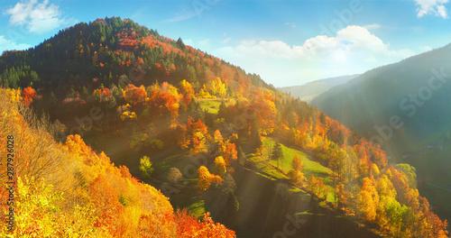 fototapeta na lodówkę Schwarzwald im Herbst