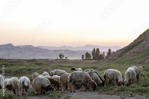 Fotografía  Iraq Kurdistan landscape view of Zagros and goats