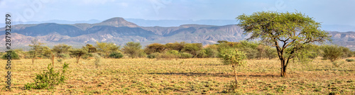 Fotografie, Obraz Panorama of Awash national park landscape with acacia tree in front and mountain