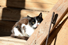 Black And White Cat Sits On A New Barn And Basks In The Sun