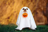 dog in a ghost costume holding a pumpkin outdoors in autumn