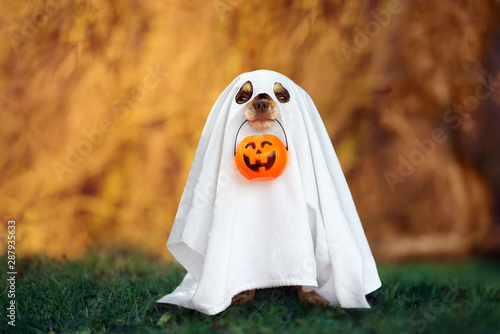 dog in a ghost costume holding a pumpkin outdoors in autumn Fotobehang