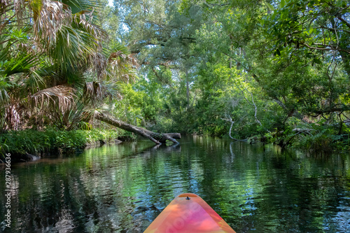 Obraz na plátně  Kayaking on Juniper Springs Creek, Florida