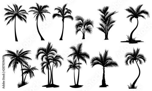 Set of palm trees Wallpaper Mural