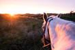 Pferd in den Dünen