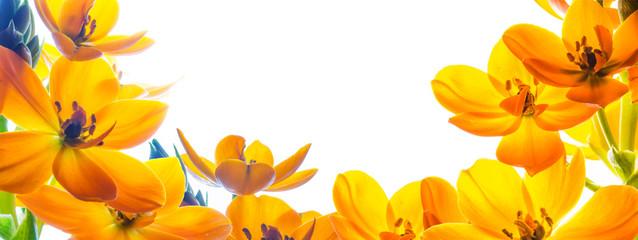 Tło z wolną przestrzenią otoczoną z trzech stron kwiatami. Żółte kwiaty na białym tle.