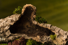 Hollow Trunk On Moss