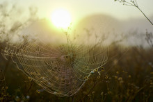Spider Woven Web On Bushes On A Field At Dawn.