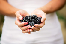 Happy Child, Holding Blackberries In Garden