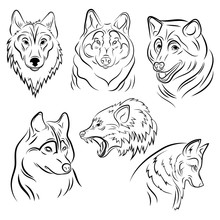 Set Of Portraits Of Wolves. Co...