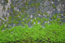 Moss Covering On The Ground
