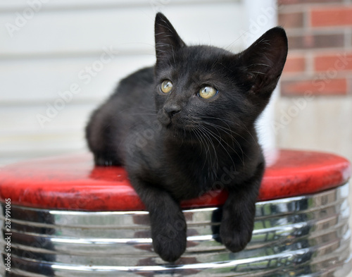 Black cat on stool