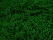Dark Green Foliage. Beautiful ...