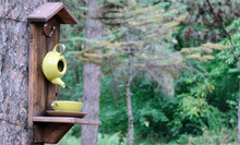 Homemade Wooden Bird Feeder Mounted On A Pine Tree In A City Park