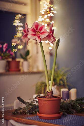 Photo Red white Amaryllis flower on seamless wallpaper pattern