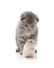 Kitten And Hamster.
