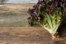 Head Of Red Fresh Salad With Root On An Old Rough Wooden Surface, Healthy Eating Concept, Selective Focus