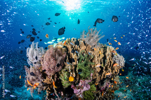 Poster Coral reefs Tropical fish on a colorful, healthy tropical coral reef