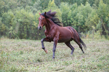 horse in the field