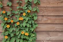 Flowering Bush Of Orange Summe...