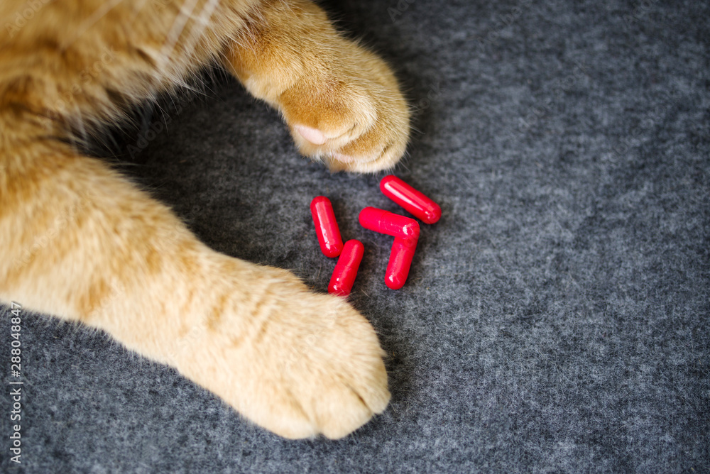 Fototapety, obrazy: Red cat paws and red capsule tablets, top view