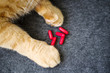 Red cat paws and red capsule tablets, top view