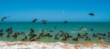 Pelícanos Volando Y Pescando ...