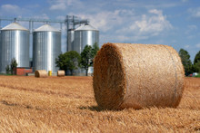 Round Hay Bales On The Field A...