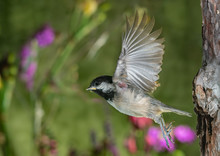 The Brave Takeoff Of A Baby Bird