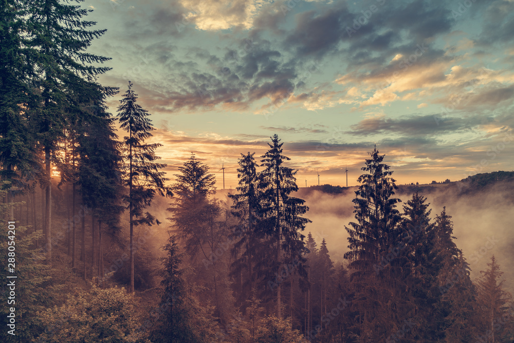 Fototapety, obrazy: Cloudscape over forest in autumn