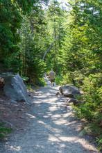 Walking The Trail Jordan Pond Acadia