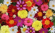 Beautiful Floral Banner, Background Of Garden Flowers.