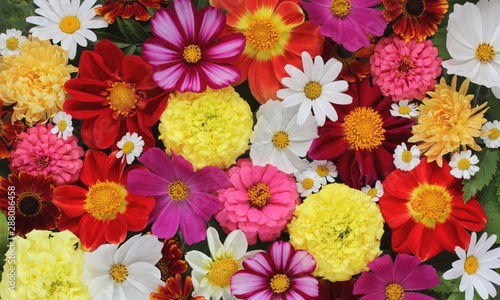 Poster Floral beautiful floral banner, background of garden flowers.