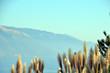 canvas print picture - Schilf mit Blick auf den Pazifik