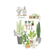 Set Of Plants In Pots, Cacti A...