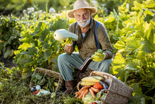 Portrait Of A Senior Well-dressed Agronomist With Freshly Picked Up Vegetables On The Garden Outdoors. Concept Of Growing Organic Products And Active Retirement