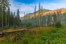 Felled And Broken Trees In Tatra Mountains.