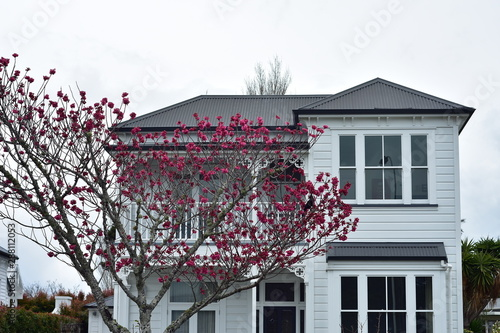 Classic white two-story wooden house with tree with saturated pink flowers in front of it Tapéta, Fotótapéta