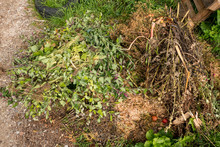 Compost Heap With Green Waste From Hedges And Branches
