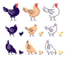 Chickens Flat Vector Illustrat...