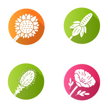 Wild Flowers Flat Design Long Shadow Glyph Icons Set. Helianthus, California Poppy, Mexican Hat, Liatris. Blooming Wildflowers, Field Weed. Spring Blossom. Vector Silhouette Illustration