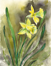 Watercolor Sketch: Two Yellow ...
