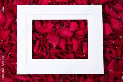 White empty frame on pink rose petals