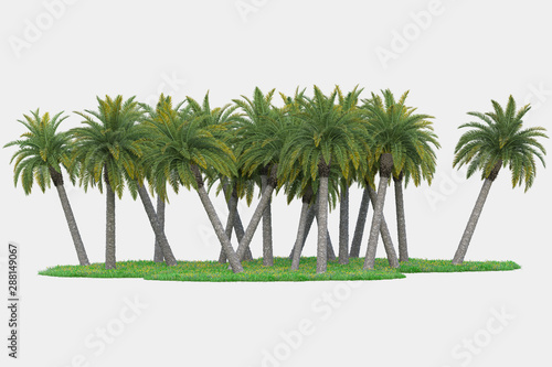 Palm trees isolated. Image useful for banners, posters or photo maipulations. 3d rendering. Illustration - 288149067